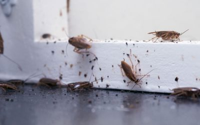 Why are Household Pests attracted to your Home?