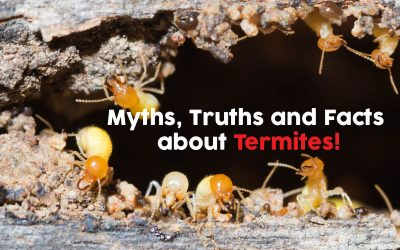 Termite Myths, Truths and Facts!