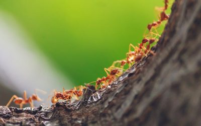 How to prevent ants in your home?